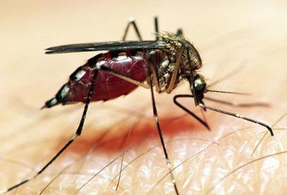 """Chết đi, nàng hóa thân thành con muỗi, tìm người để lấy lại ba giọt máu, mong được hồi sinh. Nàng bay tới đâu cũng bị sua đuổi, nên luôn miệng vo ve than vãn""""."""