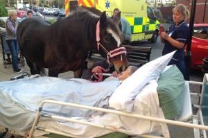 Bronwe hôn vĩnh biệt chủ nhân đang nằm trên giường bệnh. Ảnh: Manchester Evening News.