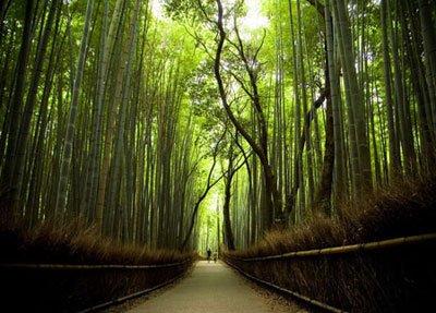 """Ở Nhật, từ mấy ngày trước Tết đã dựng """"Nêu"""" bằng cây thông vì cây thông luôn luôn xanh biểu hiện cho sự vĩnh hằng, và cả cây trúc tượng trưng cho tiết tháo trung thực, ngay thẳng."""