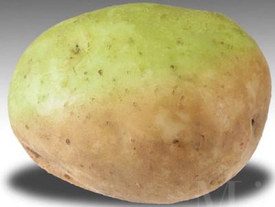 Những vùng vỏ xanh ở khoai tây chứa độc tố gấp vài trăm lần so với khoai bình thường. Nên gọt bỏ phần vỏ và củ màu xanh. Nếu vùng xanh nhiều, thỉ bỏ luôn