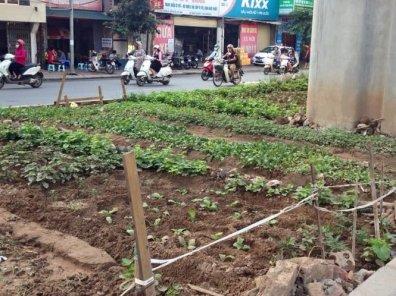 Tận dụng đất trống để trồng rau sát mặt đường - Ảnh: Tú Anh