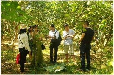 Tổ chức cho khách hàng tham quan vườn là một cách mà Cửa hàng nông dân Huế thực hiện để kết nối khách hàng và người sản xuất. Ảnh: Bá Khương/TBKTSG